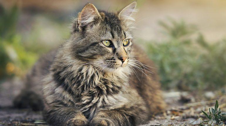 Kot, jako zwierzątko domowe - czyli mruczące futerko w naszym domu.